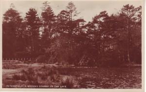 Wood corner of Petersfield Lake