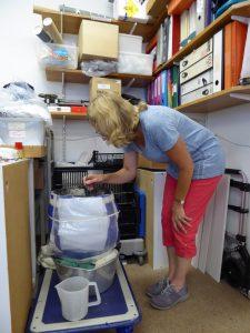 Jane King excavating Barrow 8 urn